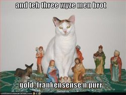 Funny-pictures-cat-attends-the-birth-of-jesus