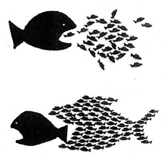 Organize fish 3