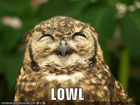 Funny-pictures-this-owl-laughs-out-loud