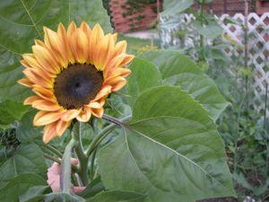 Gardenpics_001