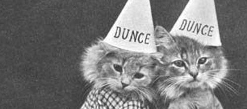 Catdunces