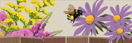 Pollinatorfriendlypix