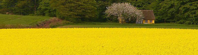 Fields-of-gold-66177
