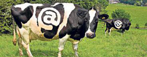 Cowbandinternet