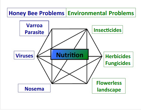 Honeybeeproblems