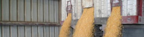 Corn.dumping-300x199