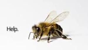 Beehelp