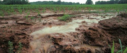 Nitrogen-fertilizer-featured-image
