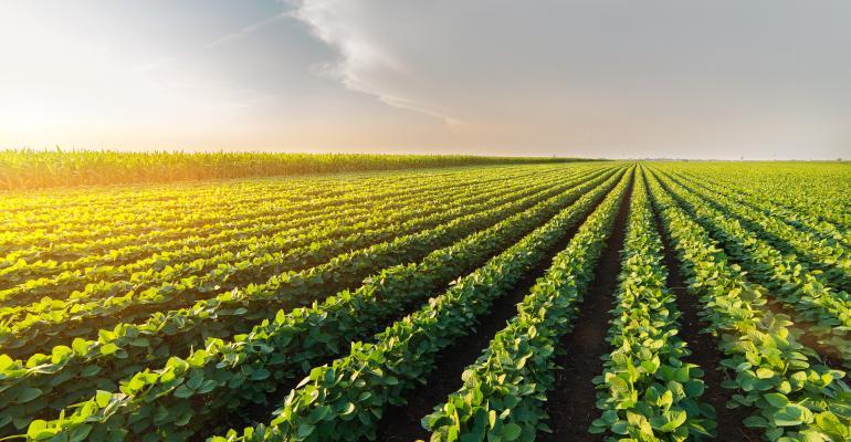 Soybean-field-802349002