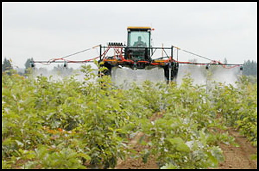 Tractor-spray-weeds