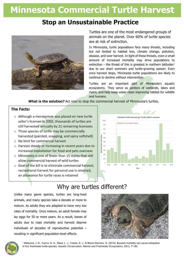 Turtleherp
