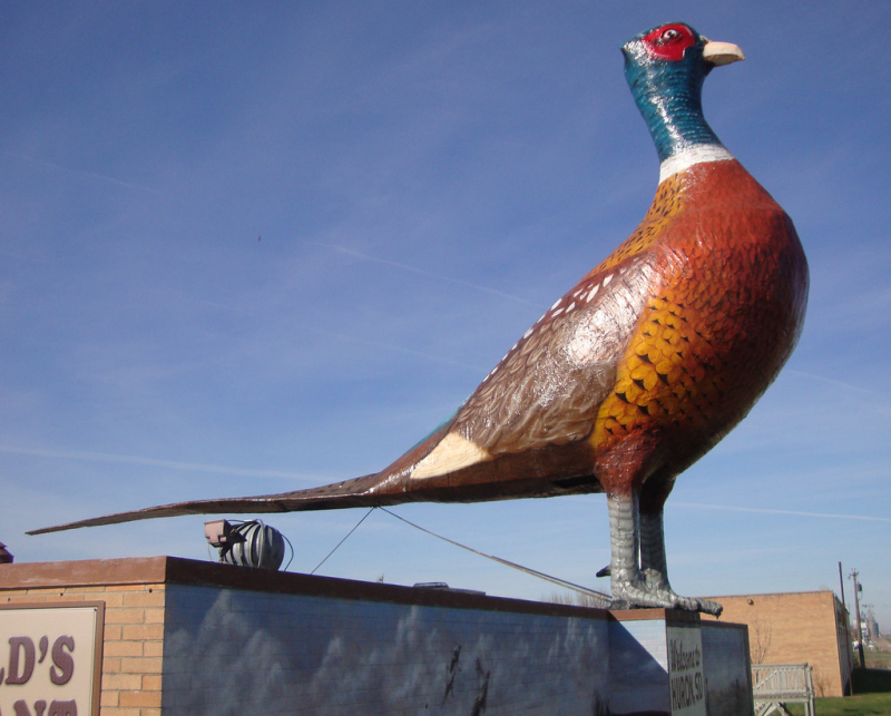 Worldslargestpheasant