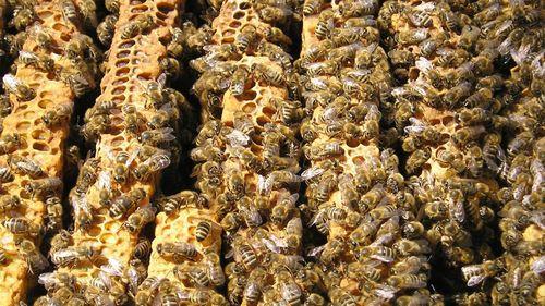 Beeshibernate