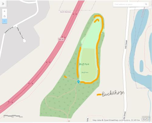 Bluff park buckthorn area (1)
