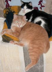 Catschair_2