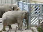 Depressedelephant