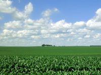 Mnfarm