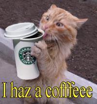 Coffeecrackcat